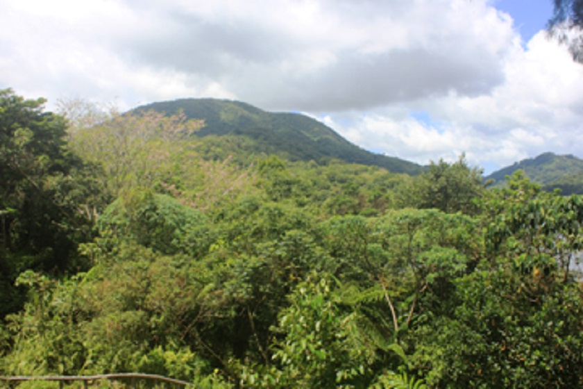 Rainforest Ecosystem (Leyte Central Highlands)